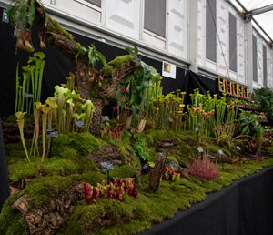 Carnivorous Plants at RHS Chelsea Flower Show